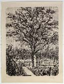 Stone Tree I by William Kentridge at Annandale Galleries