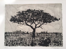 Acacia by William Kentridge at Annandale Galleries